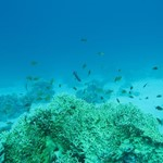 dive hurghada-diving-dive-underwater-fish-photo-red sea-hurghada-egypt