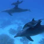 dolphin-dive-hurghada